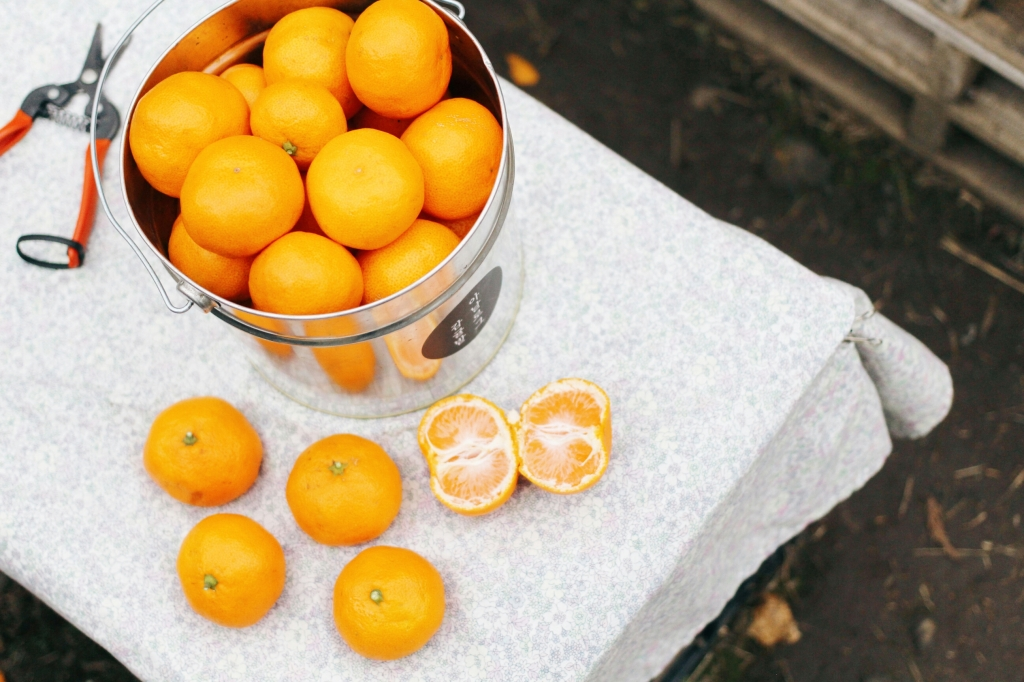 walks and wonder-analogue tangerine field jeju-001