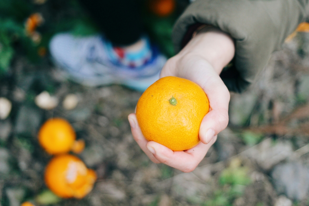 walks and wonder-analogue tangerine field jeju-009