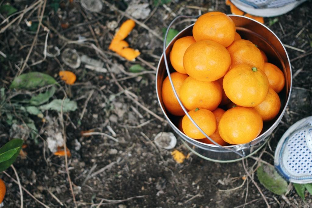 walks and wonder-analogue tangerine field jeju-018