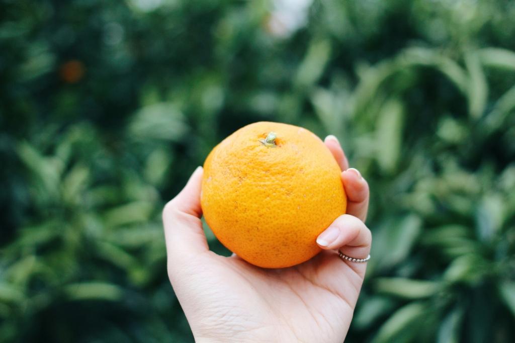 walks and wonder-analogue tangerine field jeju-019