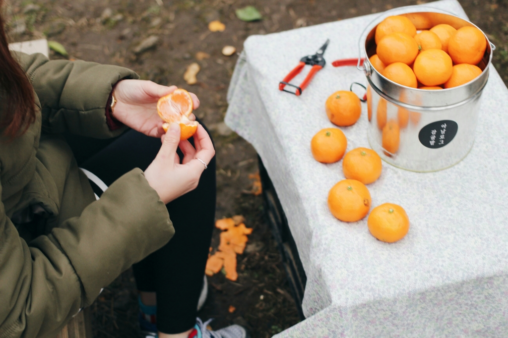 walks and wonder-analogue tangerine field jeju-022