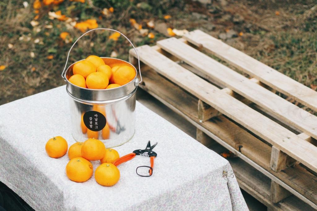 walks and wonder-analogue tangerine field jeju-028